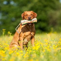 Major Dog - Gioco Food Dummy SMALL
