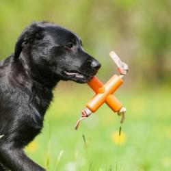 Major D - Gioco Dog X