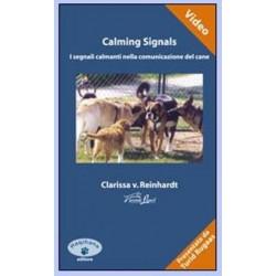 """HAQIHANA DVD : """"Calming Signals - I segnali calmanti nella comunicazione del cane"""""""