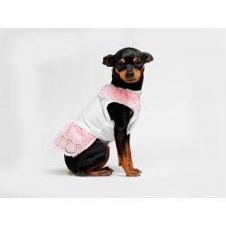 Cuccicù Maglietta Joy per cani