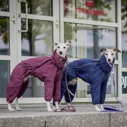 Hurtta Tuta Quilted termica invernale per cani
