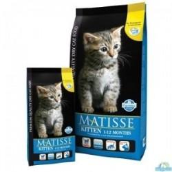 Matisse Kitten 1 - 11 mesi