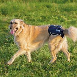 Balto BT Life tutore per la displasia dell'anca del cane