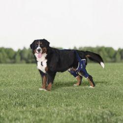 Balto BT Jump Plus tutore doppio per ginocchio del cane