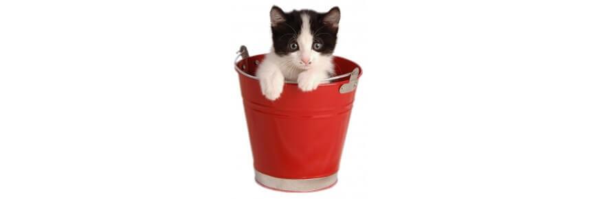Offerte per Gatti