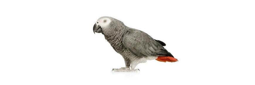 Offerte per Uccelli