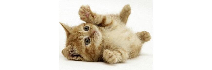 Prodotti per Gatti: Mangimi Antiparassitari