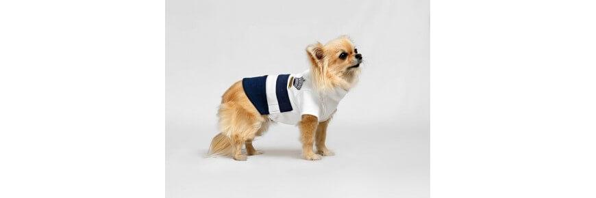 Abbigliamento per cani