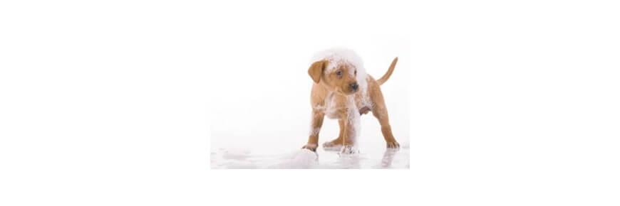 Prodotti pulizia denti orecchie occhi per cani