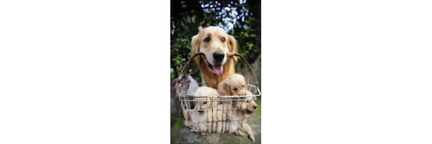 Prodotti per Cani: Cucce Mangimi Antiparassitari