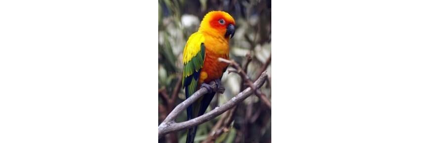 Negozio Online per Uccelli: Gabbie Mangimi Accessori
