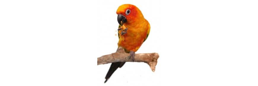 Snack per Uccelli