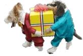 Costume di Carnevale per cani
